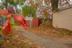Autumn view (chrishowardphotography.com) Tags: autumncolors autumntrees autumnsunset