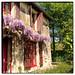 Gîte La Grosse Talle (France): garden