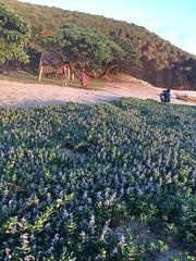 IMG_3499 (elleica) Tags: summer vacation beach islands whitebeach daet camarinesnorte calaguasislands