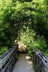 DSC00694_DxO_Grennderung (Jan Dunzweiler) Tags: hawaii jan maui bamboo hanahighway pipiwaitrail oheo bambus oheogulch bambooforest haleakalanationalpark hanahwy hwy360 bambuswald highway360 pipiwai haleakanationalpark dunzweiler haleakanp oheogulch oheo jandunzweiler