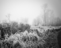 lacy trees (1 of 1) (DavidGuscottPhotography) Tags: morning fog frost lace patterns