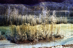 30-055 (ndpa / s. lundeen, archivist) Tags: trees winter snow color fall film ice 30 alaska 35mm river landscape nick spots pines 1970s damaged 1972 distressed coniferous alaskan dewolf openwater discolored nenana tananavalley tananariver damagednegative nickdewolf photographbynickdewolf partiallyfrozen reel30