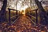 wooden bridge (Riboli Alessandro) Tags: autunno ponte wwf merate lago trochi alberi tree flora nikon d700 18mm fx full frame nikkor alba sartirana lake lecco natura bosco forest color hdr