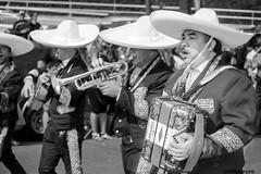 SOMBREROS BLANCOS (panache2620) Tags: parade mariachis mexican festival eos sl1 canon bw telephoto candid street streetphotography urban city photojournalism hispanic ethnic