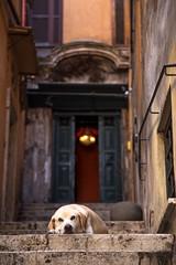 IMG_6647 (Eric.Burniche) Tags: roma roman romaitaly romaitalia rome romeitaly italy italia ancient ancientrome europe travel history