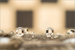 Chessboard Droplets (mikeyp2000) Tags: chessboard a77ii droplets closeup macro extreme lens ilca77m2 water chess droplet magnify magnification teleconverter tamron90mm refraction