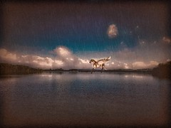 Rider on the Storm (Baky) Tags: horse lake pegasus storm rain