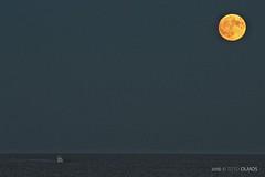 Torrevieja Moon (Toto Olmos) Tags: torrevieja alicante spain moonrise moon luna noche mar night sea mediterranean