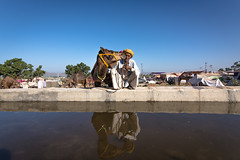 Camel Herder (Karunyaraj) Tags: camel camelherder herder reflection water drinkingwater pusharfair pushkar rajasthan waterreflection blue bluesky cwc chennaiweekendclickers cwc561 nikond610 tokina1735 tokinalens wideanglepotrait kiss camelkiss love