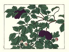Fiveleaf akebia and Chinese hawthorn (Japanese Flower and Bird Art) Tags: flower fiveleaf akebia quinata lardizabalaceae chinese hawthorn crataegus cuneata rosaceae hoitsu sakai kiitsu suzuki kimei nakano nihonga woodblock picture book japan japanese art readercollection