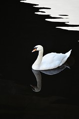 swan (revill2012) Tags: swan water white refelction