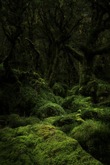 Mossy (south*swell) Tags: moss mossy forest beechforest lakemackenzie routeburntrack newzealand nature scenery tree undergrowth green