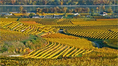 Wachau 16.20 (lady_sunshine_photos) Tags: autumn vineyards weingärten herbst herbstvomfeinsten autumnfromthefinest wachau loweraustria niederösterreich at austria österreich europe europa donau ladysunshine ladysunshinephotos supershot wonderfulworld bäume trees wasser water ´fluss flow goldenoctober herbstfärbung autumncolors panasonic lumix farbwolke theworldisbeautiful sundaylights