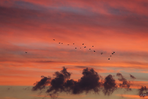 Sunset with birds from home sept oct 2016 2016-10-08 19-08-08_843