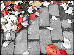 AUTUMN LEAVES ON A BRICK PATH (Visual Images1) Tags: autumn leaves brick path hss slidersunday