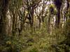 NZ Bush (mcghie.craig) Tags: lowerhutt wellington newzealand nz