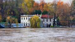 Torino (51) (cattazen.com) Tags: alluvione torino po esondazione parcodelvalentino murazzi pienadelpo cittditorino turin piemonte