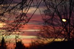 DSC_1419[1] (josephmelissa15) Tags: sky pink sunset art lige peace calm outdoor canada trees nature