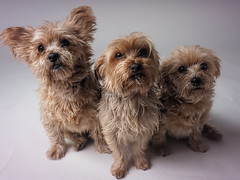 Mascotas (TAXILARI) Tags: pets mascotas estudio studio photo