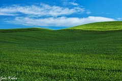 _MG_0371 (judikubes) Tags: palouse washington rollinghills bluesky clouds green field