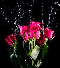Zero Gravity Bouquet (Brandon_Hilder) Tags: flowers splash