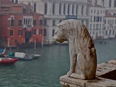 Venice, Italy (aljuarez) Tags: italien venice italy museum europa europe italia palace muse canals museo palazzo venecia venezia venedig palast italie grandcanal palacio veneto canalgrande canales canareggio ca doro
