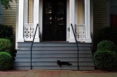 front porch kitty (ANC'N'VA) Tags: cat 50mm virginia pentax colonial steps va porch stoop fredericksburg f17