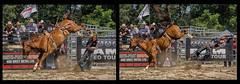 getting his kicks (Jos Pockett) Tags: horse ontario canada fall nikon cowboy kick injury dirt exeter rodeo thrown broncriding concussion barebackrider pfaction15