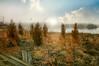 Brush Strokes (floralgal) Tags: nature parks naturepreserve longislandsound ryenewyork newyorklandscape edithreadsanctuary westchestercountylandscape bushesandseagrass ryenewyorknaturepreserve treesandbrush westchesternewyorkcoastline