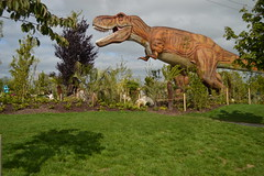 T - Rex (CoasterMadMatt) Tags: park county new ireland summer photography amusement nikon dino dinosaur photos na september photographs theme amusementpark alive rex themepark dinosaurs trex attraction irl tyrannosaurusrex ashbourne tyrannosaur meath nikond3200 2015 tayto countymeath republicofireland ire m contae d3200 dinosaursalive nearashbourne contaenam taytopark kilbrew coastermadmatt summer2015 taytothemepark coastermadmattphotography newfor2015 september2015 taytopark2015 tyrannosauris