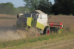 Combine harvester at rape threshing (tschanzhofmann) Tags: dusty field work landscape outside outdoors harvest rape vehicles mature crop fields vehicle crops agriculture dust farmequipment ripe threshing harvesting rapefield combines harvesters reaping farmlabor farmmachines outdoorshot oilplant agriculturaltechnology oelpflanze rapethreshing harvestingrape harvestdirection