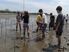 10.12.2015-AngloSingapore-BangPu-100 trees (18) (pattfoundation2014) Tags: thailand education mangrove treeplanting bangpu pattfoundation anglosingapore