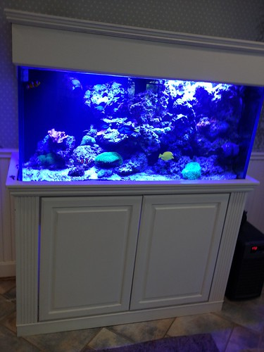 140 Gal Custom Living Reef - Private Residence - CT