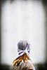 TheyKillThings-9225 (Michael William Thomas) Tags: wedding portrait newyork portraits photography buffalo theater photographer theatre rochester buffalony westernnewyork mikethomas michaelthomas mtphoto buffalowedding michaelwthomas