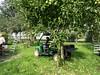 Fruit oogsten