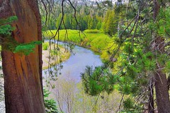 The San Joaquin River between the Trees (Explore Oct 14, 2015 #186) (Joe Lach) Tags: california trees trail wilderness mammothlakes sierranevada sanjoaquinriver inyonationalforest maderacounty anseladamswildernessarea joelach