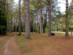 Empty campground in fall (yooperann) Tags: county autumn fall river branch michigan empty east upper fox campground peninsula deserted alger