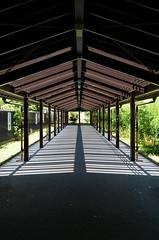 botanical garden (pedro smithson) Tags: travel sun japan garden nikon kyoto asia walk perspective pedestrian shade nippon passage kytoshi pedrosmithson