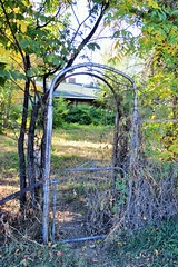 Gate (Patricia Henschen) Tags: canoncitycolorado colonorchard fall autumn orchard color leafpeeping aspen colorado usroute50