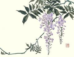 Japanese wisteria (Japanese Flower and Bird Art) Tags: flower wisteria floribunda fabaceae bunto oka nihonga woodblock picture book japan japanese art readercollection
