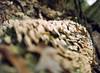 Fungi (oh it's amanda) Tags: tree mediumformat 220 expiredfilm kodakportra160nc ga645i natureycrap fujiga645i expiredin2006 shotat80