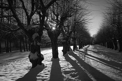Ligths and shadows (Lisbeth Pettersen) Tags: trees sun snow sol vinter lys sn all trr winther hvervenbukta skygger