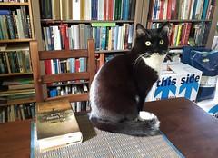 Koschka (Elisa1880) Tags: koschka cat kat thuis den haag the hague