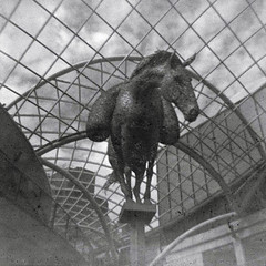 (Delay Tactics) Tags: leeds trinity shopping centre equus sculpture andy scott galvanized mild steel grid horse glass ceiling sky film square black white bw