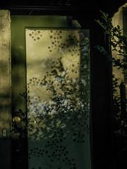 Ambiguous Shadows (prima seadiva) Tags: doorway light pattern shadow door gate entrance