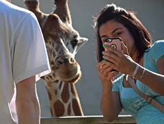 Dhoruba and Me (MTSOfan) Tags: woman giraffe dhoruba feeding deck epz cellphone selfie fun