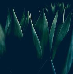 Mehikasvi (Jori Samonen) Tags: succulent plant dark talvipuutarha winter garden helsinki finland sony ilce3000 e 1855mm f3556 oss
