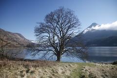 _MG_7708 (lesleycc53) Tags: scotland papofglencoe waterreflections