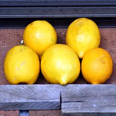 Windfalls (XPinger (Chris Sutton)) Tags: elements fruit lemons lemon windfall citrus