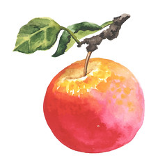 Watercolor apple with leaf (yaakvalley) Tags: apple watercolor isolated vegetarian vector ripe green white sweet diet organic summer autumn season drawing illustration painted artwork healthy design fresh health nature food juicy freshness natural vegan kitchen agriculture red yellow gardening recipe variation sort harvest edible leaf drink